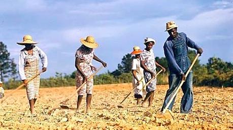 working slaves ile ilgili görsel sonucu