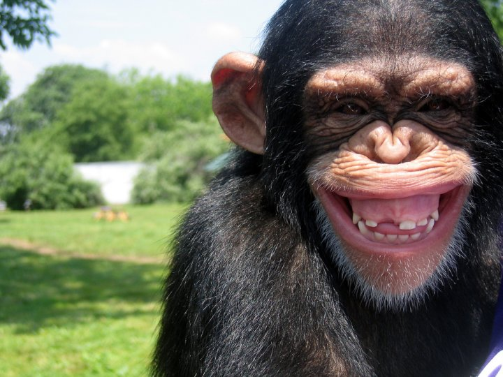 grinning monkey 
