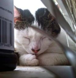 Amelia-asleep